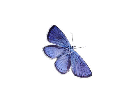 Blue Butterfly for Reema Sukumaran, Author/Speaker/Coach