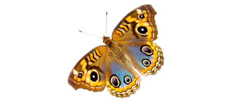 Blue and Yellow Butterfly for Reema Sukumaran, Author/Speaker/Coach